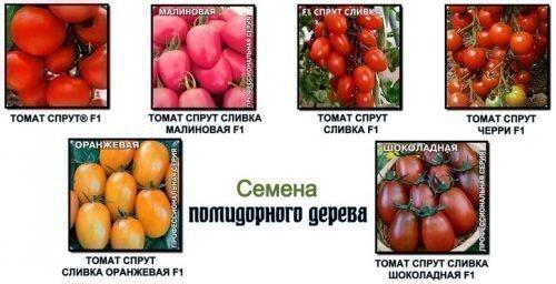 Разновидности томата Спрут F1