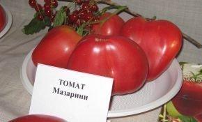 Выращивание томатов Мазарини