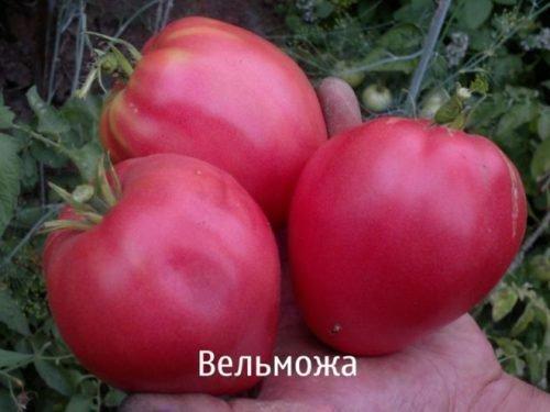 томат вельможа
