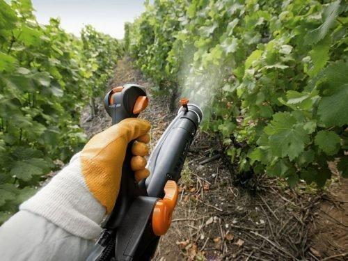 время обработки винограда