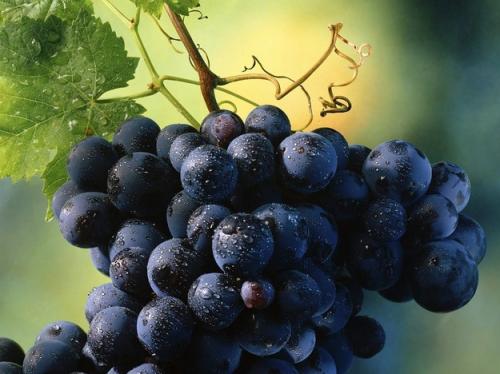 посадка винограда саженцами осенью