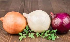 Как вырастить репчатый лук из севка, семян или рассады