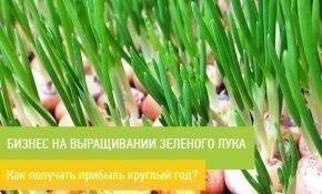 Готовый бизнес-план по выращиванию зеленого лука