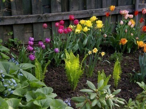Что посадить после тюльпанов