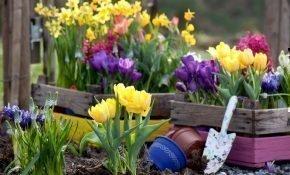 Правила весенней подкормки тюльпанов