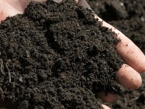 Почва для хрена