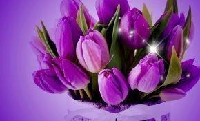Топ-15 лучших разновидностей фиолетовых тюльпанов
