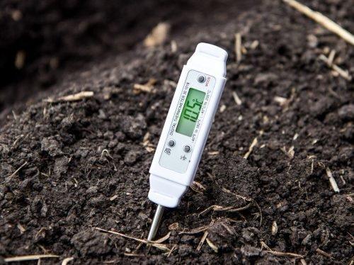 Температуры почвы для посадки тюльпанов