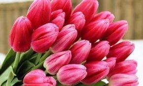 Правильный уход за тюльпанами Супермодель