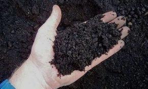 Как подготовить идеальную кислую почву для гортензий