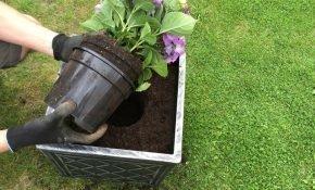 Правила посадки гортензии осенью