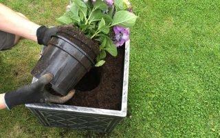 В какую почву лучше сажать гортензии