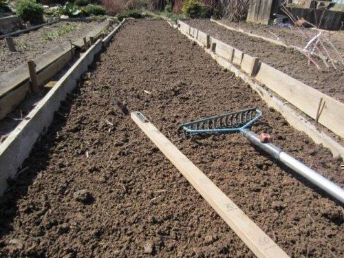 Подготовка грядок для тюльпанов