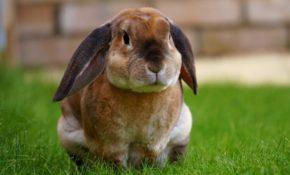 Разведение кроликов - с чем столкнется начинающий кроликовод