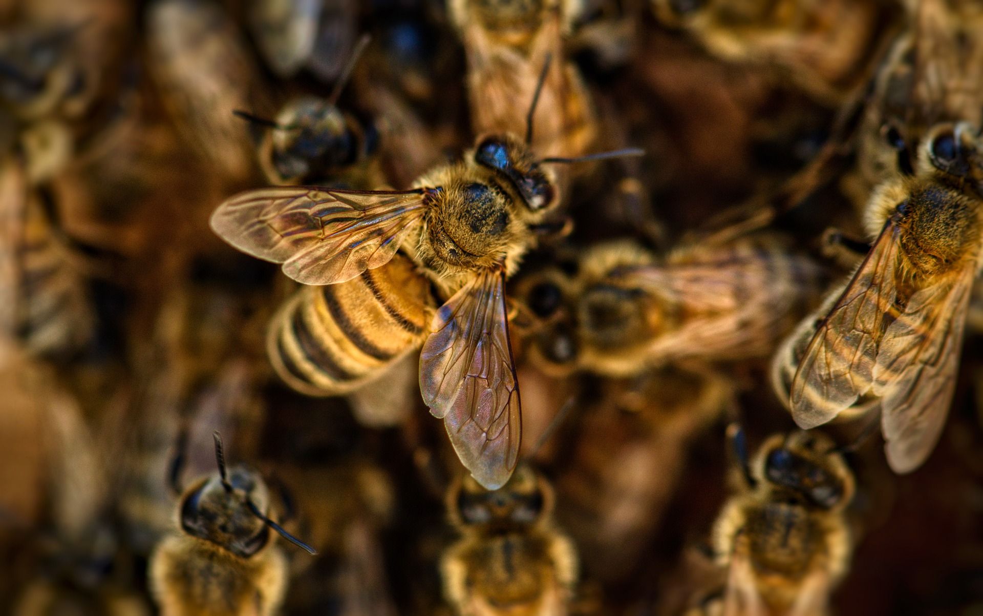 объединение пчел
