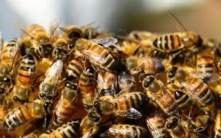 Объединение пчелиных семей осенью перед зимовкой