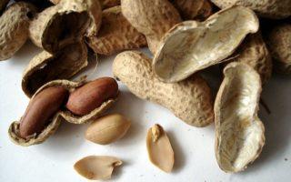 Как вырастить арахис, когда собирать, выкапывать арахис с огорода