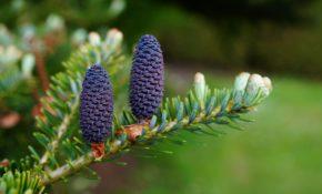 Грунт для хвойных и его состав, какая земля нужна растениям - готовим правильный субстрат