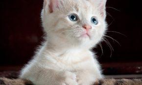 Имена для котов и кошек: список красивых, легких, популярных, современных, редких кличек