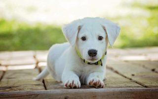 Самые классные клички для собак, имена для щенка мальчика и девочки.