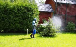 Обработка хвойных растений фунгицидами, инсектицидами и другими препаратами