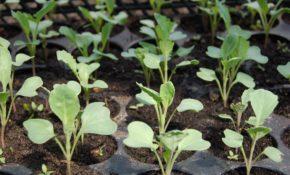 Что посадить и посеять в апреле: когда и что сажать