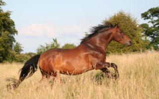 Самая быстрая лошадь