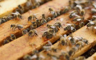 Обработка пчел