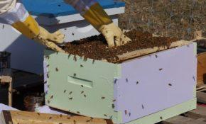 Пчеловодство с чего начать