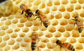 Эспарцетовый мед