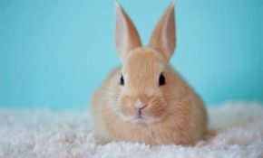 Карликовые кролики фото