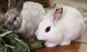 Разведение кроликов в домашних условиях видео