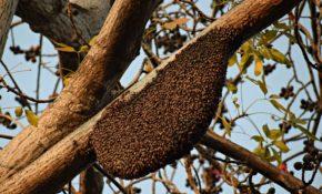 Дикие пчелы фото
