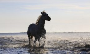 Ахалтекинская лошадь фото