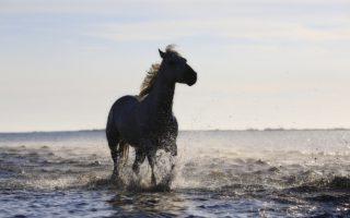 Ахалтекинская порода лошадей фото