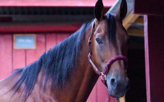 Средний вес лошади