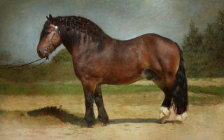 Самая большая в мире лошадь