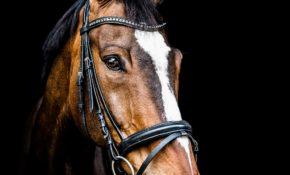 Самая красивая лошадь в мире фото