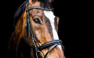Имена коней