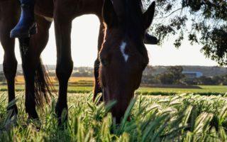 Окрас лошадей