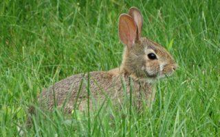 Какую траву нельзя давать кроликам